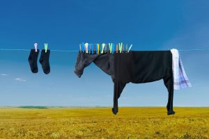 Artist hangs clothes to create Playful farm animal illusions |Helga Stentzel