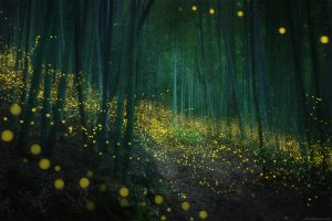 Russian photographer Daniel Kordan frames a sea of Firefly Mating Season in Japan