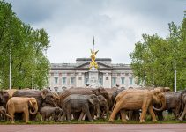 A 100+ elephants enter cities across the globe telling stories of Coexistence.